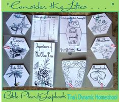 "Free ""Consider the Lilies .  . . "" Plants of the Bible Lapbook. Perfect for springtime studying."