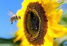 Lição da abelha, sobre o DESAPEGO