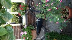 a typical Dutch patio. Beautiful Gardens, Beautiful Flowers, Bicycle Art, Bike, Flower Petals, Flower Beds, Types Of Plants, Outdoor Plants, Garden Gates