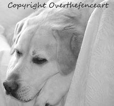 Animal Photography Labrador Handmade Greeting Card Labrador in