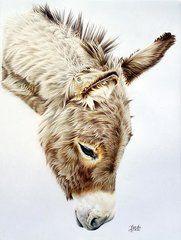 Donkey Days  by Tina Marie Appleby