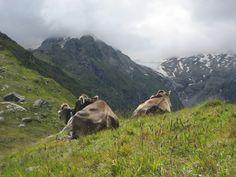 auf dem Muott'Ota im Oberengadin im Kanton Graubünden