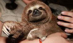 The Eager Pursuit of Sloths