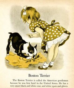 Boston Terrier and Irish Terrier Illustrations by Tibor Gergely Children's Book on Etsy, $6.88 AUD