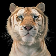 Magnificent Wild Animals Portrait Photography by Tim Flach #photography #wildlife