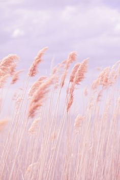 Dreamy Pastel Beach Grass by Pink Poppy