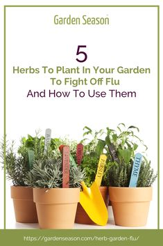 5 Herbs To Plant In Your Garden To Fight Off Flu And How To Use Them | Catching the flu during this time can cause panic because of the pandemic happening now. However, in case you feel under the weather and caught a common cold, all you have to do is pick out something from your herb garden that can help you to stay stronger and feel better. #herbgarden Hydroponic Gardening, Hydroponics, Gardening Tips, Raised Garden Bed Kits, Easy Vegetables To Grow, Feeling Under The Weather, Garden Seeds, Edible Garden, Fresh Herbs