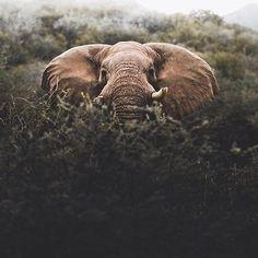 Peek a boo  . . Image : @donalboyd Location: Namibia  . . #earthstoke #stoked #planetstoke #naturestoke #nature #peace #powerful #amazing #stoke #beautifuldestinations #earth #nature #amazing #bucketlist #instagood #stoked #summer #sun #fun #roadtrip #night #timelapse #adventure