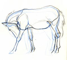 Horse Drawings   second horse drawing from the archive