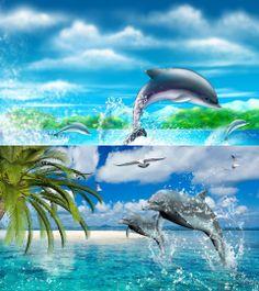 Dolphins Sea Dance
