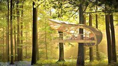 Ces maisons qui ne font qu'un avec la foret #Treehouses
