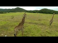 Giraffe View – Safari Camp – Giraffe View – Safari Camp