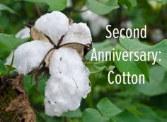 When your second anniversary rolls around, it's time for cotton gifts: http://thetwovet.com/blogs/news/10007117-second-anniversary-time-for-cotton-gifts
