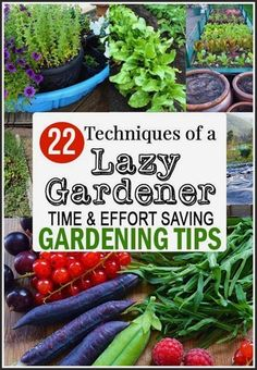 How to be a Lazy Gardener 22 effort saving gardening ideas including tips on how to reduce t&; How to be a Lazy Gardener 22 effort saving gardening ideas including tips on how to reduce t&; My Love […] gardening design Hydroponic Farming, Hydroponics, Hydroponic Growing, Garden Pests, Garden Tools, Garden Projects, Box Garden, Fence Garden, Garden Office