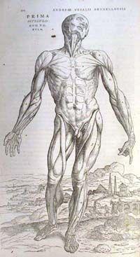 Anatomical references - Andreas Vesalius