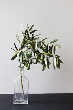Love the idea of incorporating olive tree branches the symbolism middle east of it all pretty Could do this with some flowers to brighten it up If floral prices get too high am also wonder (Clear Bottle Centerpieces) Deco Floral, Arte Floral, Ikebana, Olive Tree, Indoor Plants, House Plants, Planting Flowers, Floral Arrangements, Greenery
