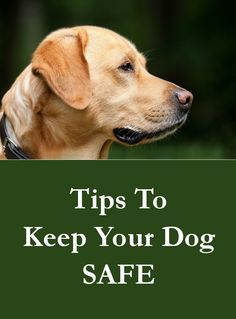 Some simple steps to follow which will protect your dog from harm