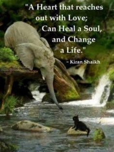 """A heart that reaches out with love; Can heal a soul and change a life"" #quotes #animals"