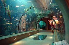 101 Things to See and Do on the Oregon Coast - #9 The Oregon Coast Aquarium