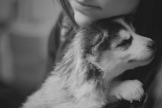 True love #dog #husky #animal