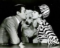 0 tony curtis and Christine Kaufmann with french poodle in Wild and Wonderful 1964 French Poodles, Standard Poodles, Tony Curtis, Bichon Frise, All Dogs, Dog Life, Fur Babies, Famous People, Dog Cat