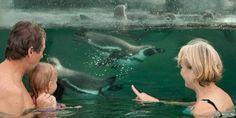 Spreewelten Bad  Schwimmen mit Pinguinen - wenn das kein Highlight ist!
