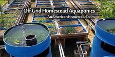 Off Grid Homestead Aquaponics | An American Homestead - Living Off Grid in the…