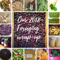 Our 2018 foraging wrap up Elderberry And Elderflower, Pretty Good, Nice, Spring Projects, Wild Edibles, Nature Study, Nature Crafts, Its A Wonderful Life, Medicinal Plants