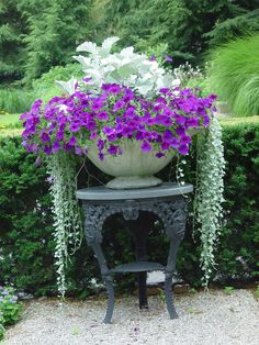 Purple Petunias, Dusty Miller, and Silver Falls Dichondra in a stunning display.