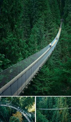 Capilano Suspension Bridge in Vancouver! Cool Things to Do in Vancouver, BC #Canada
