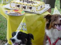 Doggie Bag Cafe Pet Party Planners - YouTube Doggie Bag, Party Planners, Animal Party, Birthday Parties, Adoption, Pets, Youtube, Animals, Anniversary Parties