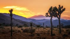 Joshua Tree Sunset - null