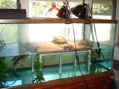 Diy Turtle Dock New 3 Ways to Clean A Turtle Tank Wikihow – Modern Aquatic Turtle Habitat, Aquatic Turtle Tank, Turtle Aquarium, Aquatic Turtles, Water Turtles, Turtle Tank Setup, Turtle Dock, Turtle Tanks, Turtle Basking Area