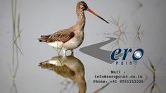 Paradise of Birds - Mangalajodi, 4Days/3Nights - Proposed Route: Mangalajodi Village - Bhetnoi