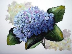 paint a realistic hydrangea in watercolor - Google Search by lorrie