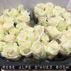 #Rose #Rosa #AlpeDHuez: Available at www.barendsen.nl