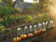 pumpkins & cloches