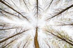José Ramon Moreno, Ways in the sky  © José Ramon Moreno, Spain, Shortlist, Nature & Wildlife, Professional, 2013
