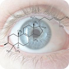 """The lens of the eye is made up of many millions of thin fibrous cells that contain water-soluble structural proteins known as crystallins...As we age, crystallins may unfold or be oxidised or otherwise damaged. As the damage builds up, so opaque clumps are formed which scatter light, leading to a cloudiness in the lens, eventually resulting in a cataract....Treatment is by surgery...Recent work by a team of Chinese researchers suggests that an alternative treatment strategy may be…"