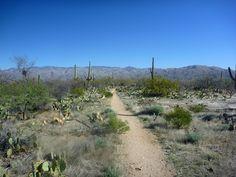 Loma Verde Trail