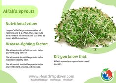 Alfalfa sprouts infographic