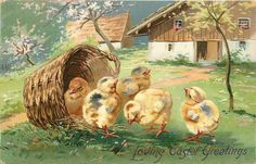 LOVING EASTER GREETINGS  five chicks, one in basket and four to the right