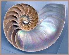 Photo Nautilus shell