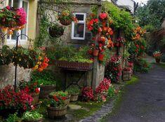 Camino de macetas floridas