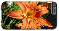 Orange Lilies IPhone 6s Case featuring the photograph Orange by Erika H