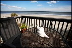How does a free week on Tybee Island sound? Pretty good, right? We have some amazing Winter Specials going on right now with opportunities to save hundreds on your next winter getaway: http://www.tybeevacationrentals.com/fill-the-gap.htm?NCK=pin