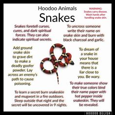 ~*~ HOODOO ANIMALS: SNAKES ~*~ Snakes have long been a symbol of spiritual things. In Hoodoo they are primarily associated with cursing and… Witchcraft Spell Books, Wiccan Spell Book, Witch Spell, Wiccan Witch, Hoodoo Spells, Magick Spells, Voodoo Hoodoo, Eclectic Witch, Herbal Magic