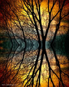 Sunset Tree Silhouette Abstract 3 by Striking Photography by Bo Insogna