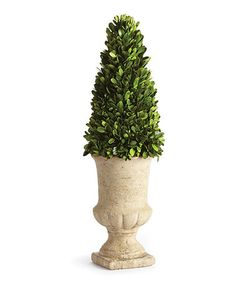 Loving this Cone Topiary on #zulily! #zulilyfinds