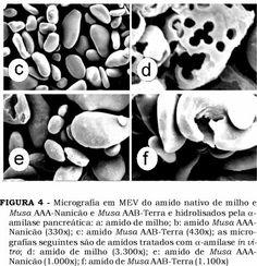 amido milho ao microscopio from http://www.scielo.br/scielo.php?pid=S0101-20612005000200005&script=sci_arttext
